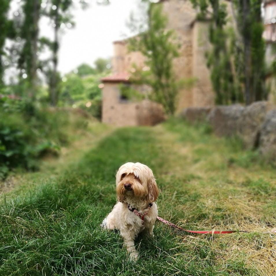 experiencias con perros