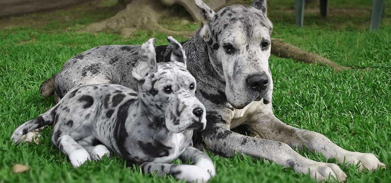 réplica en peluche de tu perro