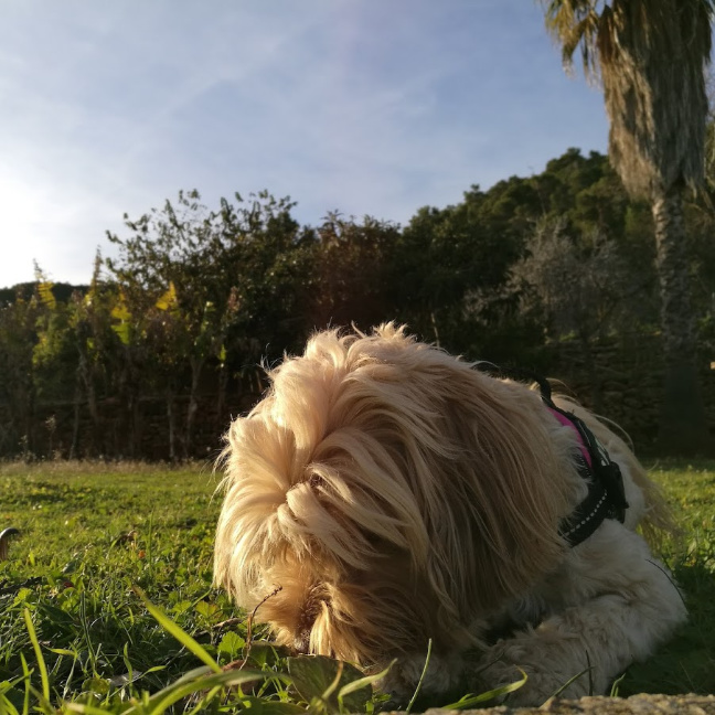 dejar oler al perro durante el paseo