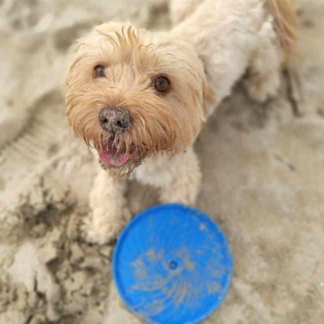ir con perro a la playa