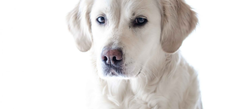 alerta veterinaria