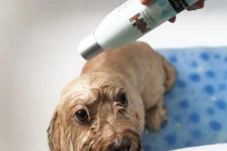 PSH cosmética para perros