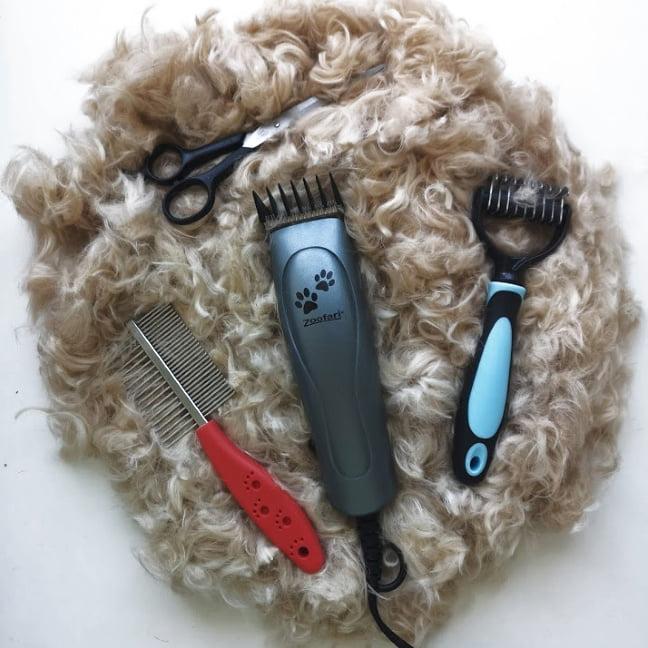 cortar el pelo al perro