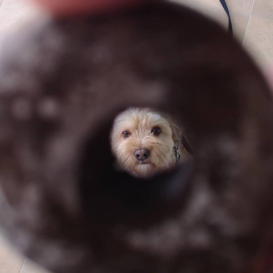 dognetting