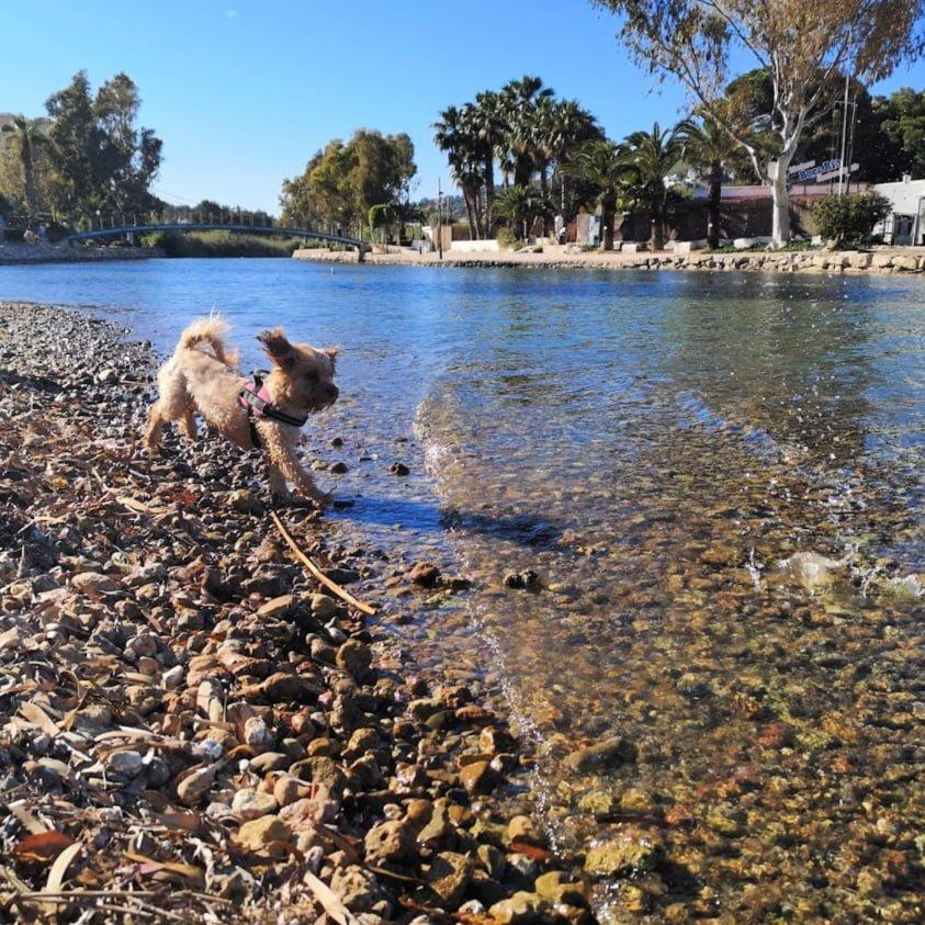 ola de calor en perros