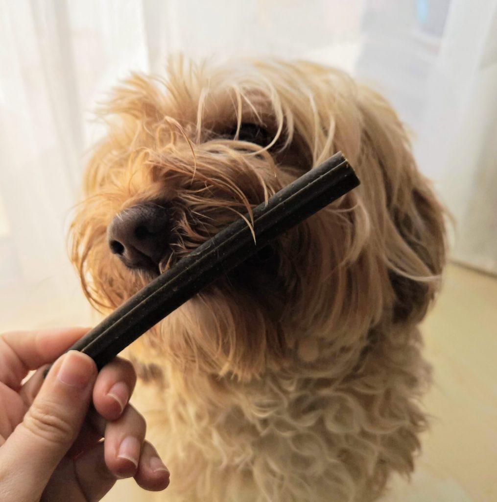 perro come con ansiedad