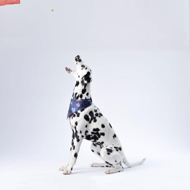 alternativas de comida para perros