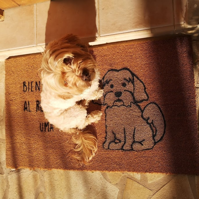 "personalized dog mats ""class ="" wp-image-4947 ""/> </figure> </p></div> <div class="