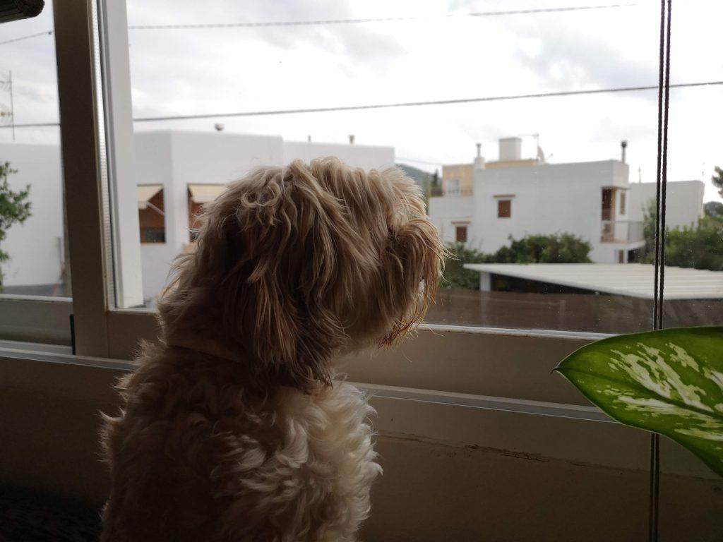 ideas para entretener al perro en casa