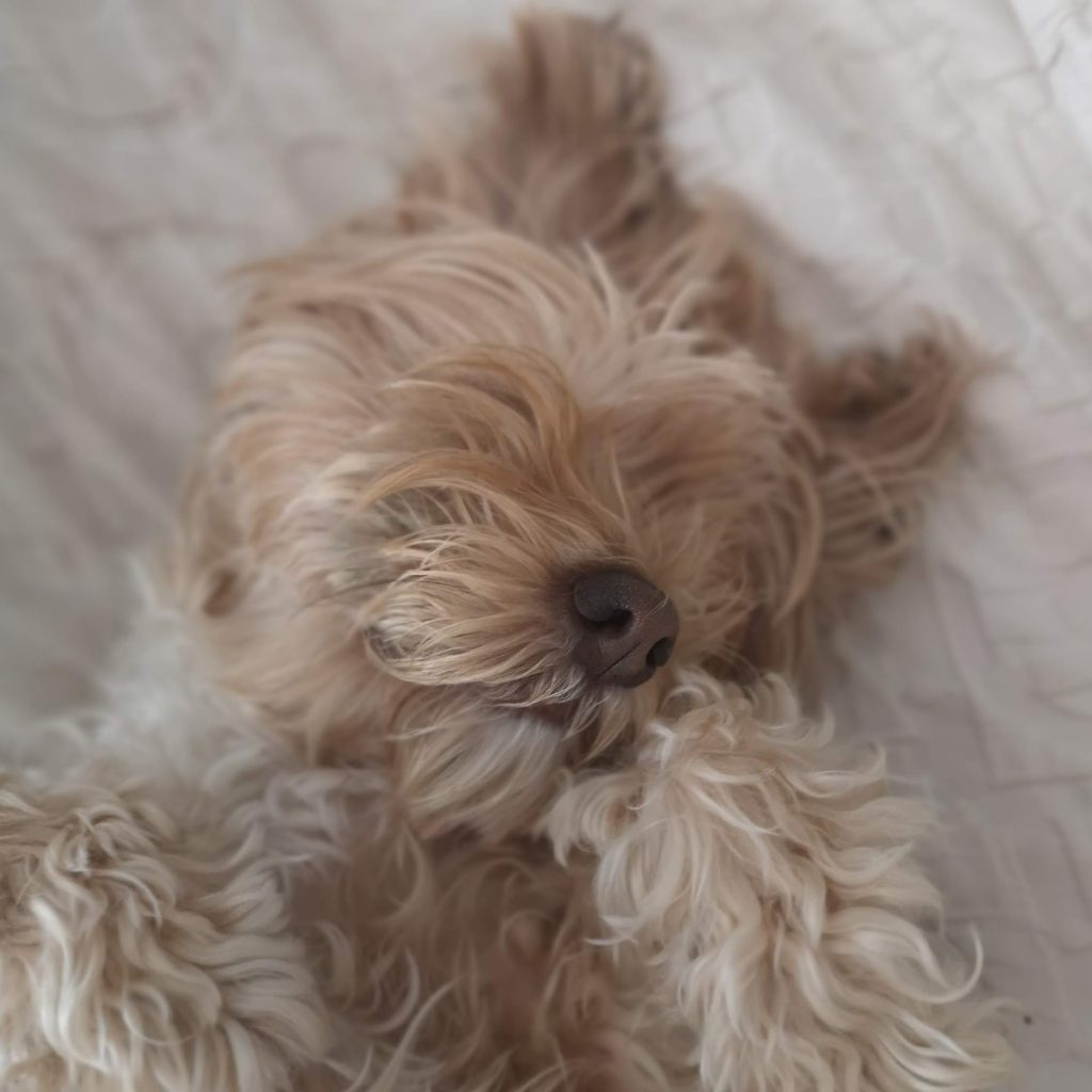 bultos en la piel del perro