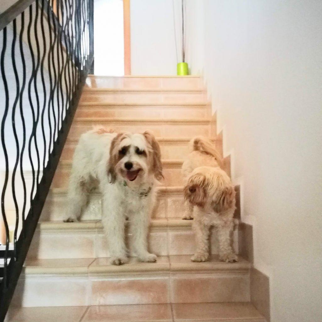 agresividad en perras