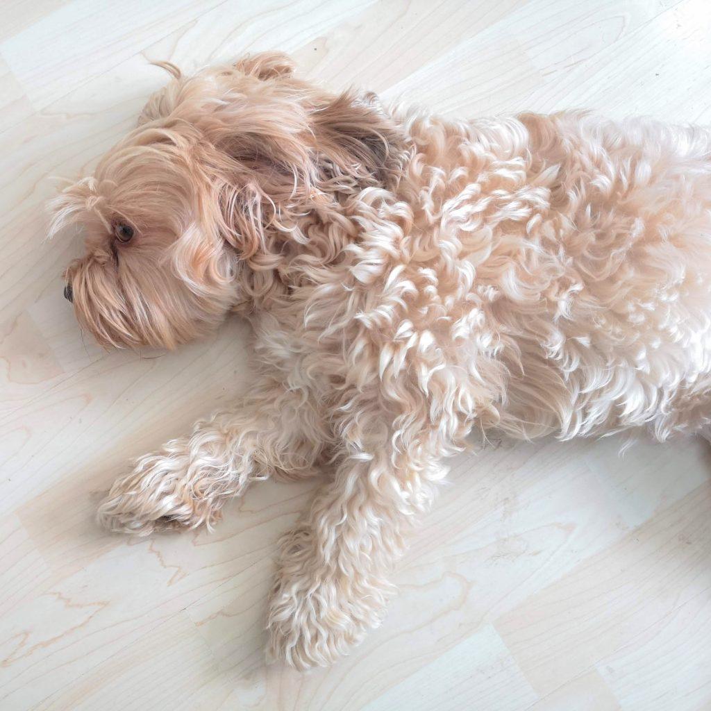 automedicar a un perro