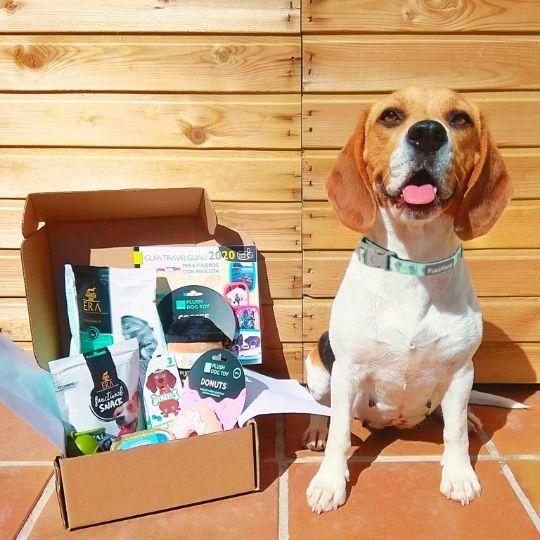Mr Guau caja de suscripción para perros