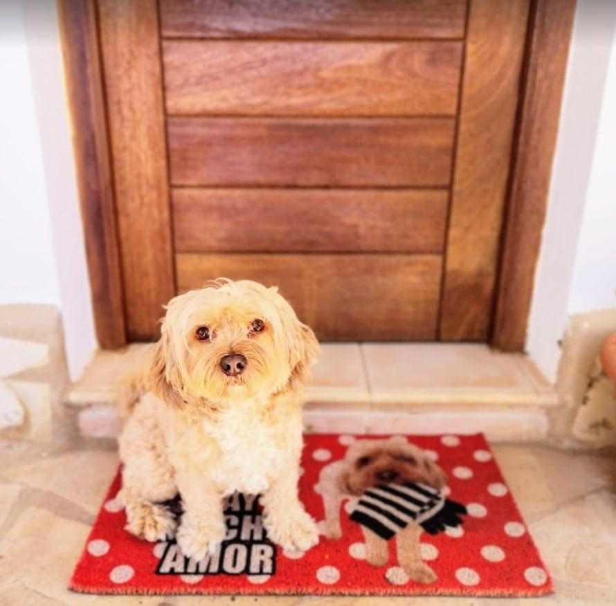 paillassons personnalisés à l'image de votre chien